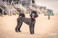 Check out today's seaside session by Lebolo Pet Photographyhttp://buff.ly/1I02ebx ‪#‎doglover‬ ‪#‎petphotography‬ ‪#‎petlovers‬ ‪#‎dogs‬
