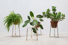 Spitsberg plantscape - restored.nl