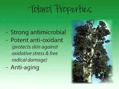Totarol | Living Nature