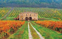 vintage homes in Italy | Rural Rejuvenation: 'Farm Stays' Help You Eat Smart At Home