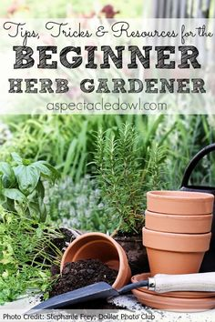 nice Tips, Tricks & Resources to Grow Your Own Herb Garden - A Spectacled Owl