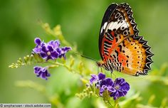 This year's Big Butterfly Count survey has begun, and will continue until August 7. This nationwide annual survey was first launched in 2010 and has now become the largest of its kind in the world. The event aims to raise awareness among people about their environment.