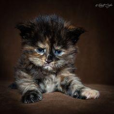 Oltre 25 fantastiche idee riguardo trespolo per gatto su - Mobili norvegesi ...