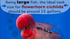 Fish Quotes, Cichlids, Pets, Animals And Pets