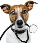 8 Things You Need to Know About Canine Influenza