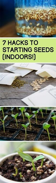 A great way to start seedlings is by putting them in an empty lemon rind. It may sound a bit weird, but the nutrients from the lemon rind will seep into the soil and help the seeds grow better…MoreMore #GardeningTips