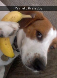 This dog taking a very important phone call.   29 Things That Are Way More Important Than Work Right Now