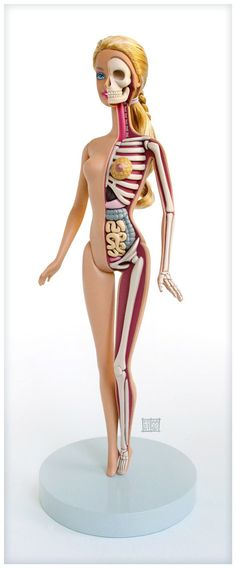 Barbie anatomy by Jason Freeny