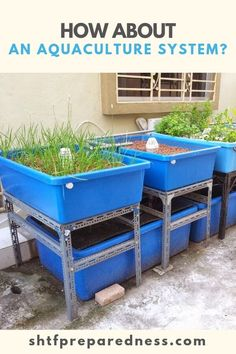 How About an Aquaculture System? Indoor Gardening Supplies, Container Gardening, Gardening Tips, Aquaponics System, Hydroponics, Backyard Aquaponics, Aquaponics Plants, Hydroponic Systems, Hydroponic Gardening