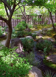 Japanese garden - Absolutely beautiful for a shady area    Would look really pretty at moms at the backside of their yard.