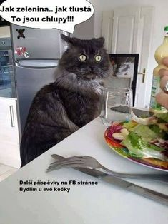 Favorite Quotes, Funny Pictures, Lol, Humor, Cats, Animals, Amazing, People, Fanny Pics
