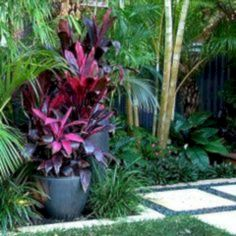 planting, red cordyline in pots the featu. Tropical planting, red cordyline in pots the featu. Tropical planting, red cordyline in pots the featu. Small Tropical Gardens, Tropical Garden Design, Small Courtyard Gardens, Small Courtyards, Tropical Landscaping, Small Garden Design, Small Gardens, Tropical Plants, Outdoor Gardens