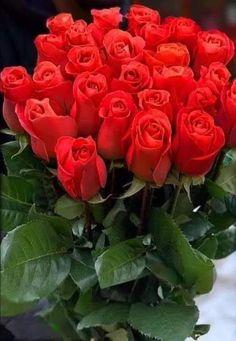 18 red roses bouquet on Mercari Beautiful Rose Flowers, Beautiful Flower Arrangements, Flowers Nature, Exotic Flowers, Beautiful Flowers, Rose Flower Wallpaper, Red Rose Bouquet, Colorful Roses, Flower Pictures