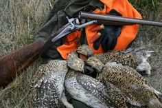 Resultado de imagen de purdey gun Double Barrel, Leaf Blower, Outdoor Power Equipment, Guns, Shotguns, Hunting, Dogs, Weapons Guns, Revolvers