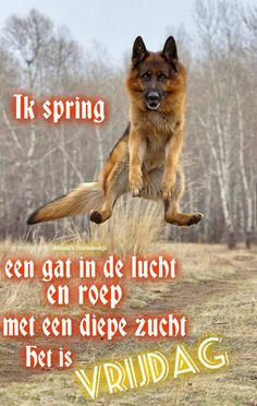 Vrijdag Cute Funny Animals, Funny Dogs, Cute Box, Dog Rules, Days Of Our Lives, Dog Portraits, Big Dogs, Happy Friday, Pet Birds