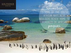 Cape Town | Simon's Town African Penguin, Boulder Beach, Table Mountain, True Beauty, Cape Town, Bouldering, City, Outdoor, Image