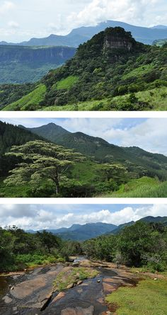 Images of the Knuckles Mountain Range, Sri Lanka #SriLanka #Knuckles #Mountains  Original pictures by Drriss  Marrionn (https://www.flickr.com/photos/drriss/) - https://www.flickr.com/photos/drriss/10270884876 - https://www.flickr.com/photos/drriss/10191491864 - https://www.flickr.com/photos/drriss/10270862806