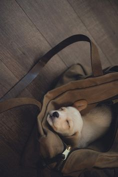 pooped puppy in a pouch