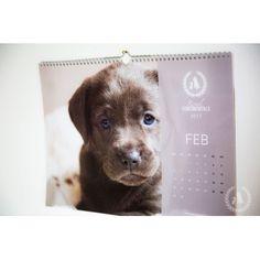 Chihuahuas, Labrador Retriever, Shops, Dog, Animals, Nice Asses, Labrador Retrievers, Diy Dog, Tents