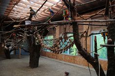 homes with indoor aviary - Google Search