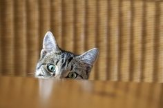 There's are a few good reasons why your kitty can't keep her paws to herself.