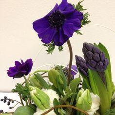 Purple anenomies.