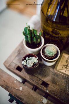 cute little plants