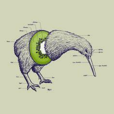 Kiwi Anatomy Art Print by William McDonald | Society6