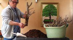 Jardín de bonsais de Antonio Ruiz como plantar estacas de olmos y en general 1 parte