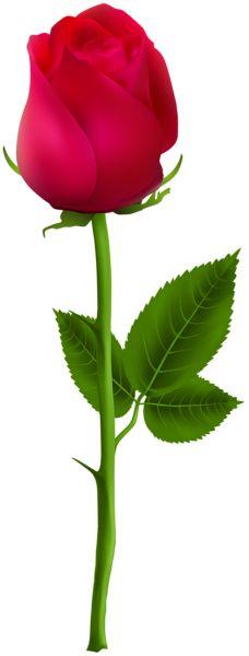 Red Rose PNG Clip Art Image