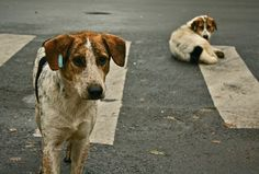 Cartago to Build Attention Center for Street Dogs - The Costa Rica News Chinese Dog, Street Dogs, Homeless Man, Stop Animal Cruelty, Animal Welfare, Stray Dog, Animal Rights, Animal Shelter, Animal Rescue