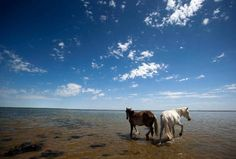 horses by the Aral Sea