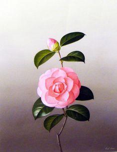 Camellia: Prince Frederick. Paul Jones.