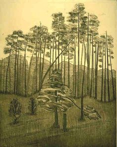 LODGE POLE PINES etching of Cook Forest - pinned by pin4etsy.com