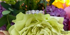 Wedding Rings For Women, Wedding Ring Bands, Platinum Diamond Wedding Band, Platinum Jewelry, White Diamonds, Band Rings, Great Gifts, Arms, Jewels