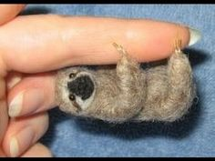 Pygmy Sloth : Documentary on the Tiny Pygmy Sloth of Panama