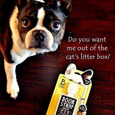 If you want to keep me and your dog out of the cat's litter box, Door Buddy is your go to product! TheDoorBuddy.com