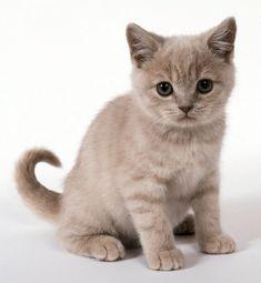 10 Best Lucu Kucing Imut Images Kittens Cutest Cats Cute Cats