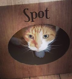 Awwwww Spot is soooo cute!  yay! We are so pleased he likes it  thank you so much