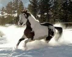 horse and snow oh yeah