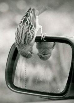 Image in Fotografia em preto e branco/Photography black and white collection by Valentina Venceslau Hello Beautiful, Beautiful Birds, Animals Beautiful, Beautiful Things, Animals And Pets, Funny Animals, Cute Animals, Animal Memes, Animal Antics