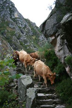 *SPAIN ~ Paisaje asturiano / Asturian landscape.