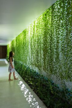 Plant-covered walls