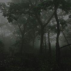 Dark Green Aesthetic, Nature Aesthetic, Aesthetic Grunge, Paradis Sombre, Twilight, Arte Grunge, Dark Paradise, Forest Fairy, Dark Forest