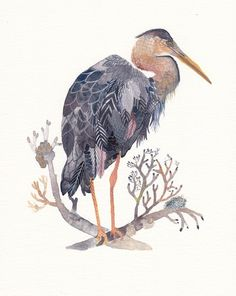 Grey Heron watercolor print - $20 8x10