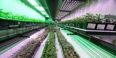 #New Brunswick Hopes Marijuana Will Boost Flailing Economy - Huffington Post Canada: Huffington Post Canada New Brunswick Hopes Marijuana…
