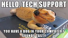 bearded-dragon-tech-support
