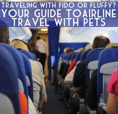 Do you want to travel with your dog or cat? Here's my guide to flying with your pet from my experience flying with my pug!