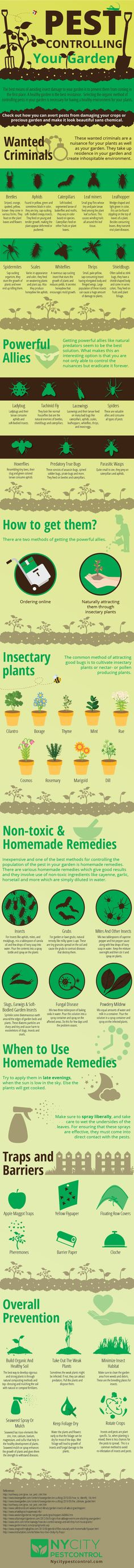 Ways to rid your home of pests!