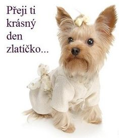 I wish beautiful morning . Beautiful Morning, Cute Dogs, Teddy Bear, Funny, Yorkies, Fasion, Pet Clothes, Factory Farming, Animales